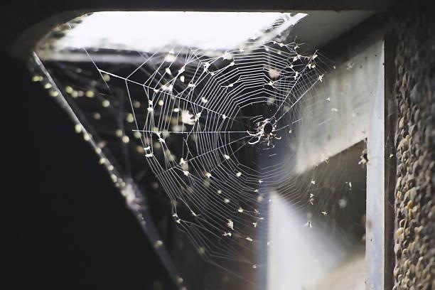 Web-Life – Foto