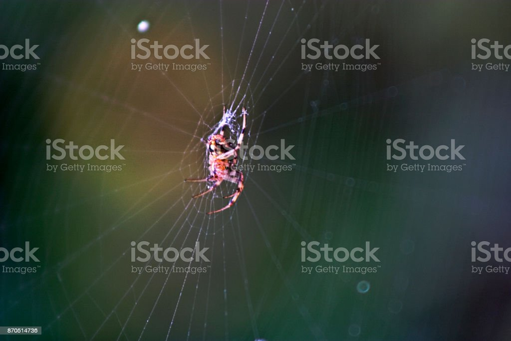 Web Spider royalty-free stock photo