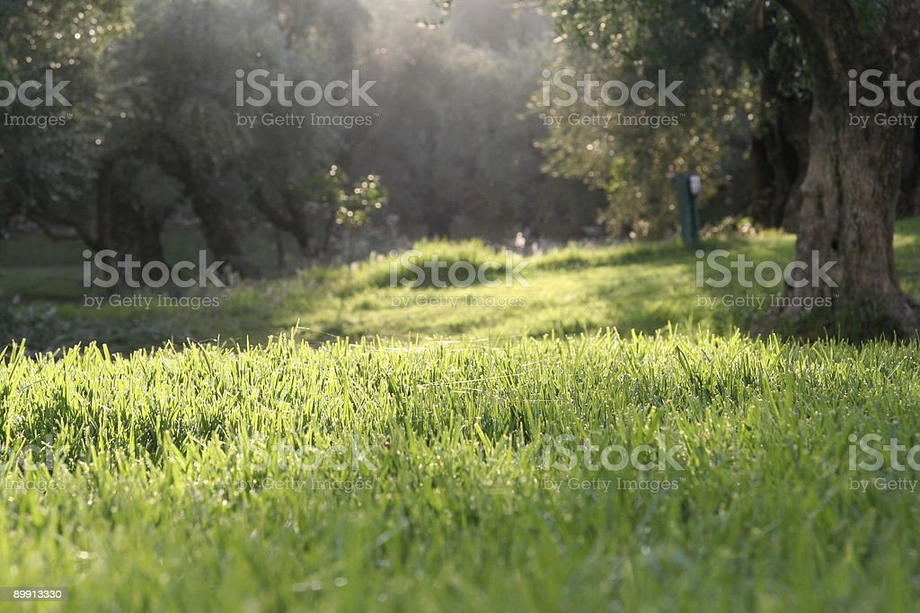 webs in grass royalty-free stock photo