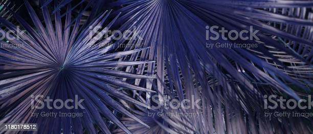 Website banner of tropical foliage in violet soft colors picture id1180178512?b=1&k=6&m=1180178512&s=612x612&h=eiafdaa8mhwpxjmjvtxw65ylynbyqo4ijrgnrfjkufk=