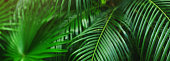 Website banner of tropical palm leaves an foliage. Concept of blog heading, tropical theme, summer blog header. flora and plants.