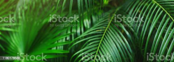 Website banner of tropical palm leaves picture id1180178555?b=1&k=6&m=1180178555&s=612x612&h=vztzrlnbz0hnbbqxn3m9g swfb px3g5ntci nn1uya=