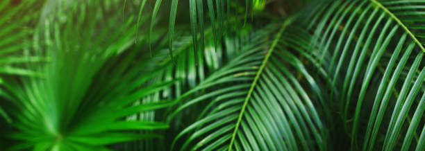 Website banner of tropical palm leaves picture id1180178555?b=1&k=6&m=1180178555&s=612x612&w=0&h=usrkgo6ohrxuk rasb0ee6ofskqfblk0lhrbdpp899w=