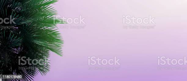 Website heading and banner with copy space in violet color and palm picture id1180178480?b=1&k=6&m=1180178480&s=612x612&h=m6fupnb6p4i57n0roqhx4l92z7azdaii ixwc 3nsx0=