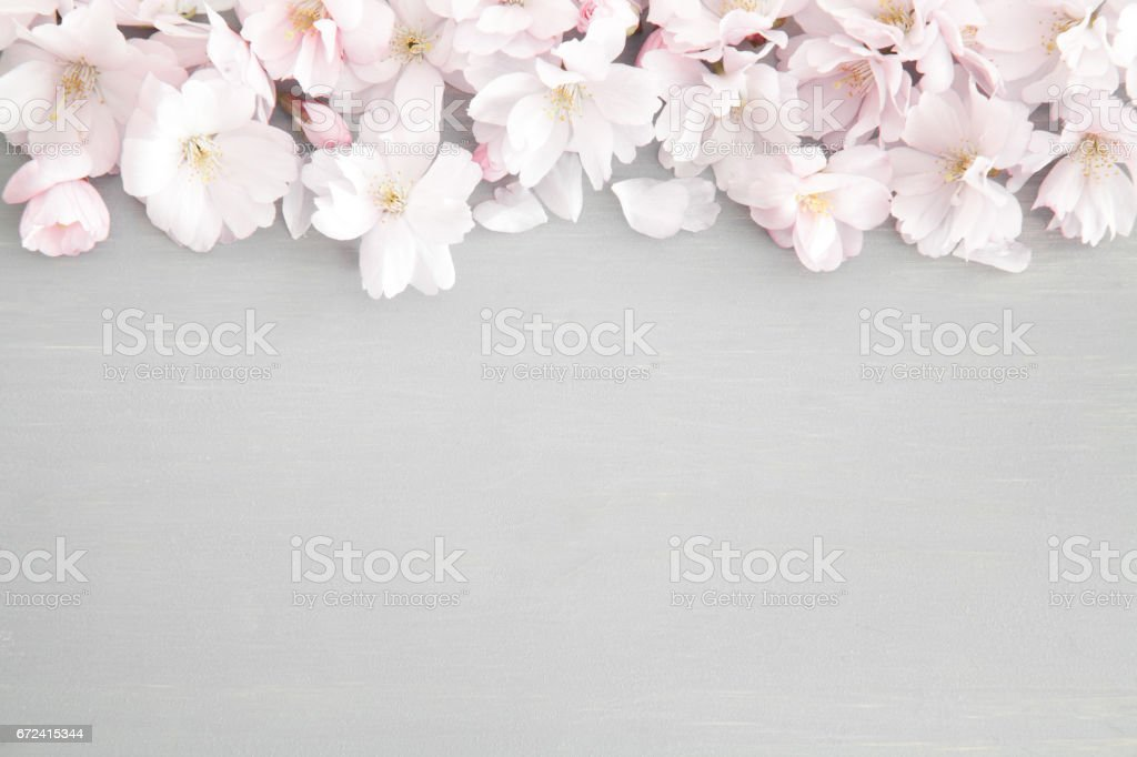 Wedding Background With Spring Blossoms Stock Photo - Download Image Now