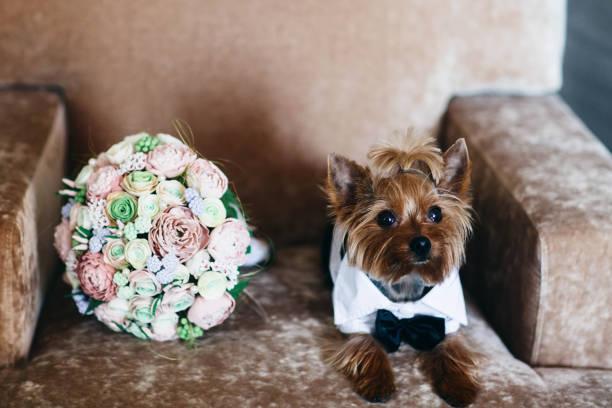 結婚式の花の花束。お祭りの犬。結婚式の準備 - ウェディングファッション ストックフォトと画像