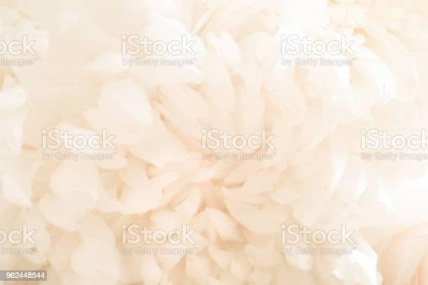 Wedding bouquet petals closeup picture id962448544?b=1&k=6&m=962448544&s=612x612&h=bgahqnlbqu yp nmzelnmi7qvo8kxsojnjbmca0kz6s=
