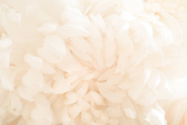 Wedding bouquet petals close-up stock photo