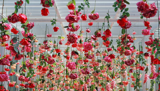 Wedding ceremony decoration with many artificial flower hanging from ceiling. Beautiful Upside down flowers. stock photo