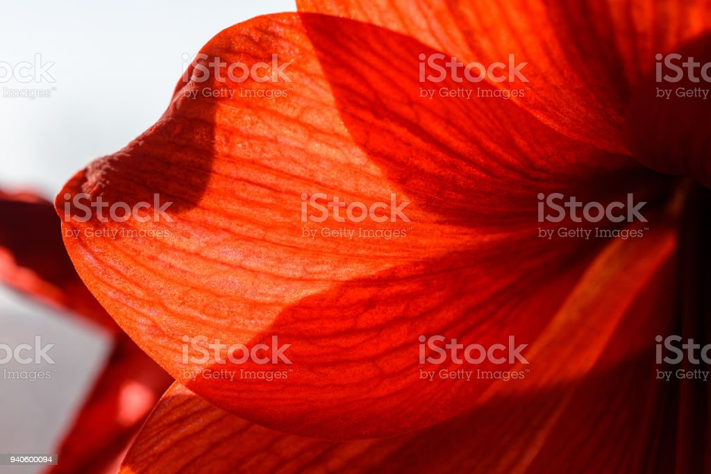 wedding decorations theme, red flowers in white interior stock photo