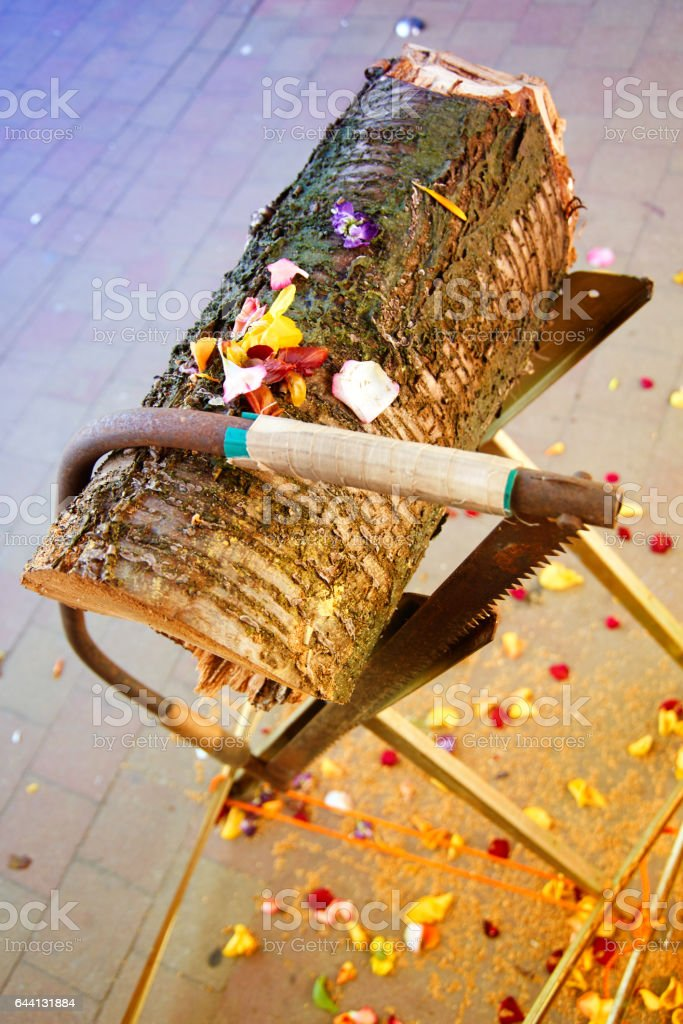 wedding game tree trunk saw stock photo