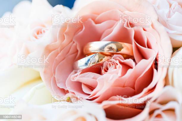 Wedding golden rings with pastel pink rose picture id1064145248?b=1&k=6&m=1064145248&s=612x612&h=pehbtxxo3qubqct ohuneorg4euen7ejhjlgpjlqq0c=
