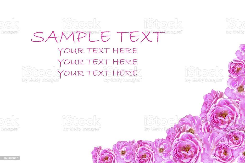 Wedding pink roses background isolated on white background. royalty-free stock photo