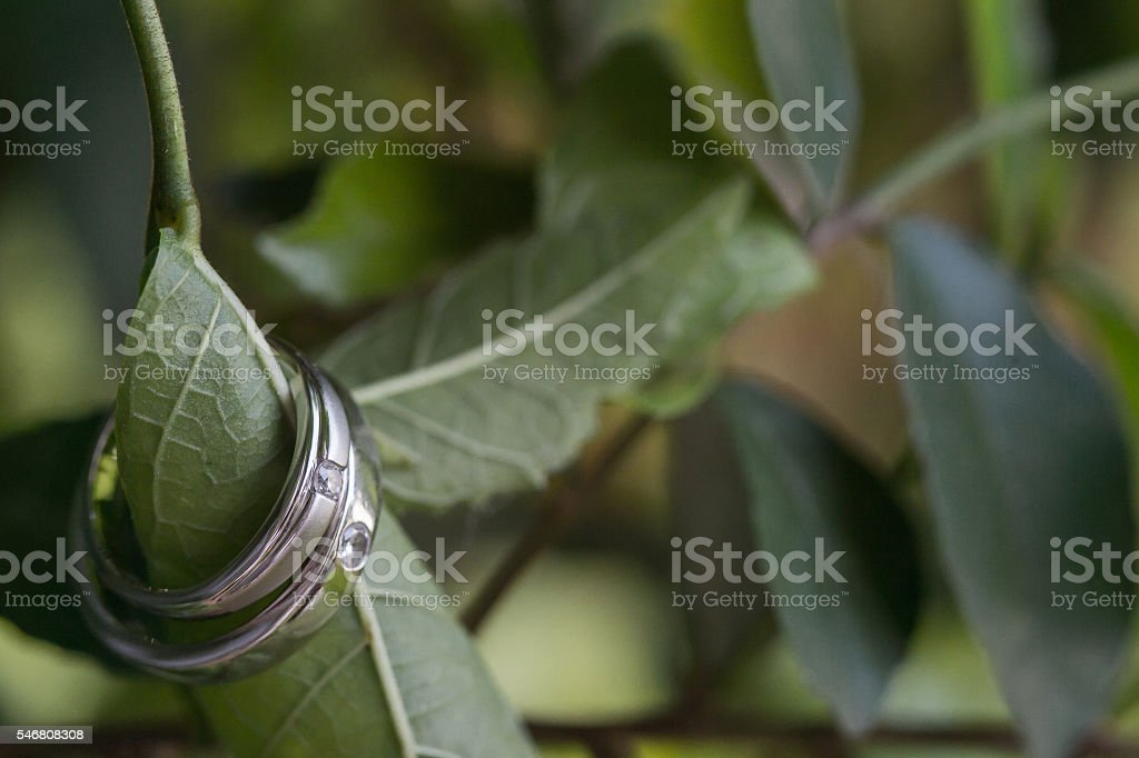 Wedding ring inserted on a green leaf. stock photo