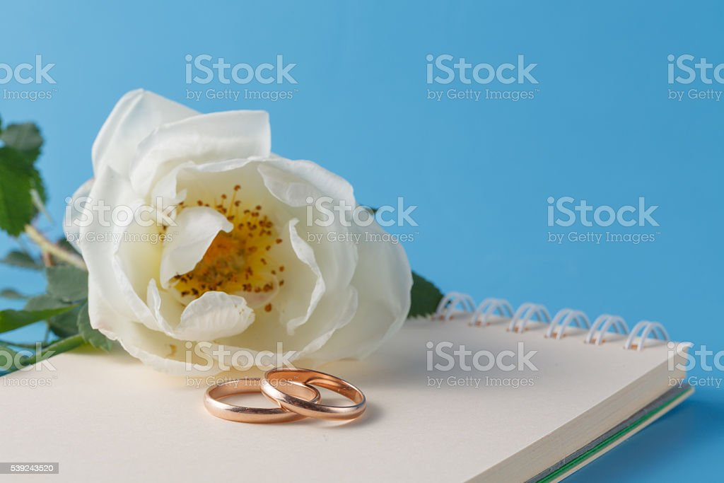 wedding rings and Wild rose royalty-free stock photo