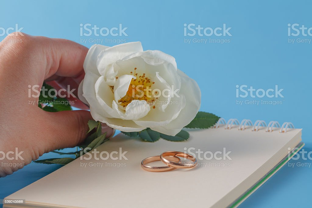 wedding rings and Wild rose foto de stock libre de derechos