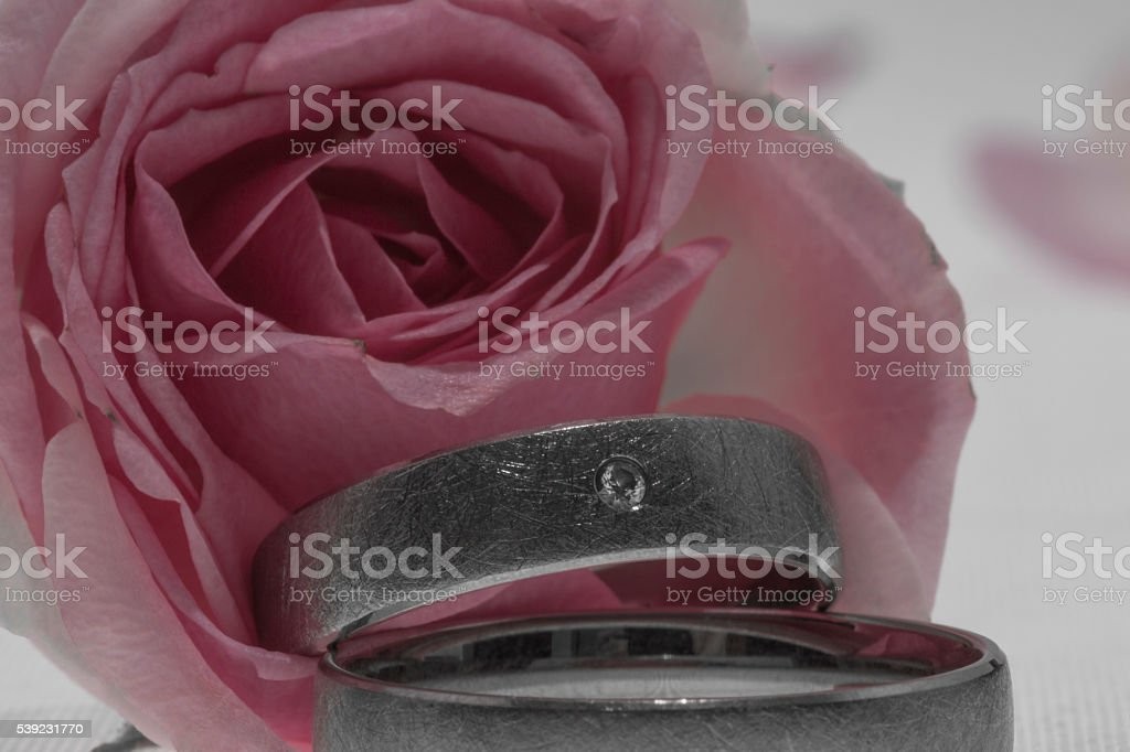 wedding rings in a rose royalty-free stock photo