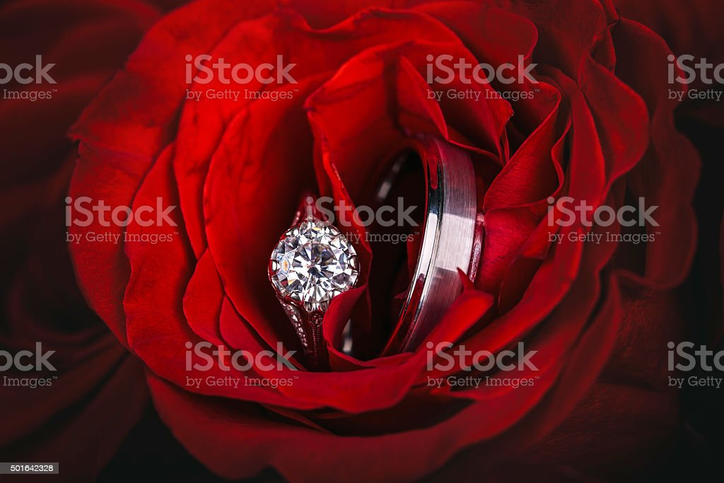 Wedding rings in red roses stock photo