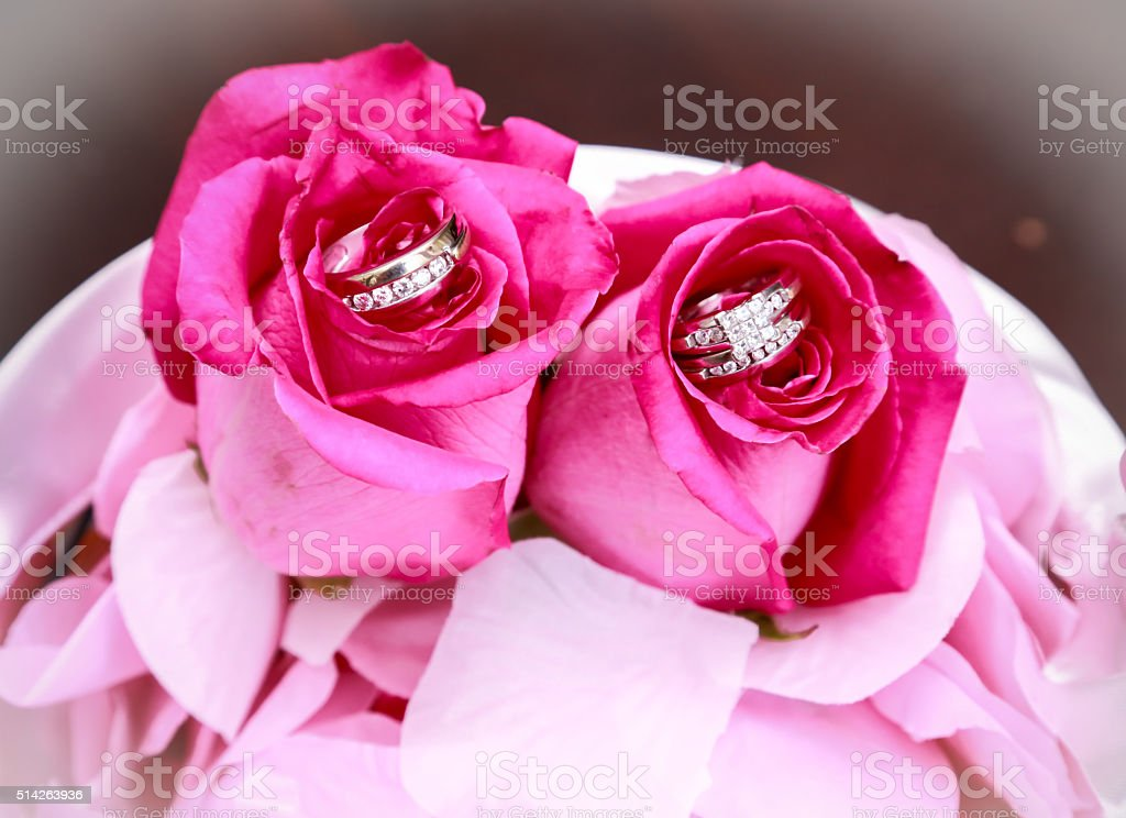 wedding rings in roses stock photo