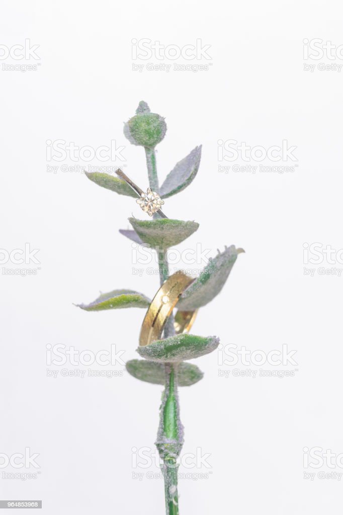 Wedding rings on a beautiful leaf branch. royalty-free stock photo