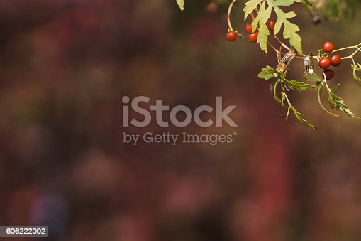 istock wedding rings on a branch with berries on colorful background 606222002