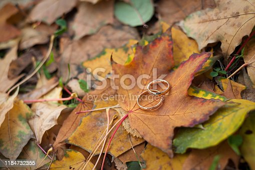 istock wedding rings on autumn leaves 1184732355