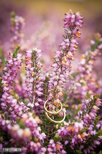 Gold wedding rings on purple lavender plant