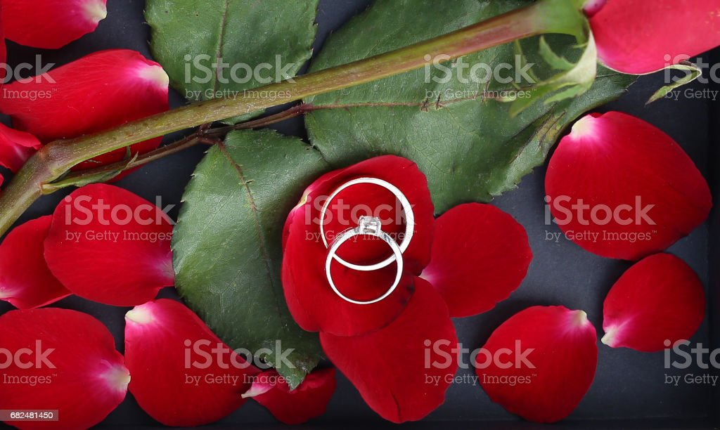 Wedding rings on petals of red rose against black background. royalty-free stock photo