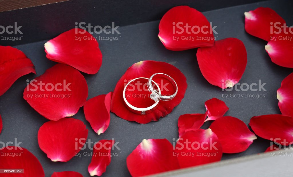 Wedding rings on petals of red rose in luxury leather box. Lizenzfreies stock-foto