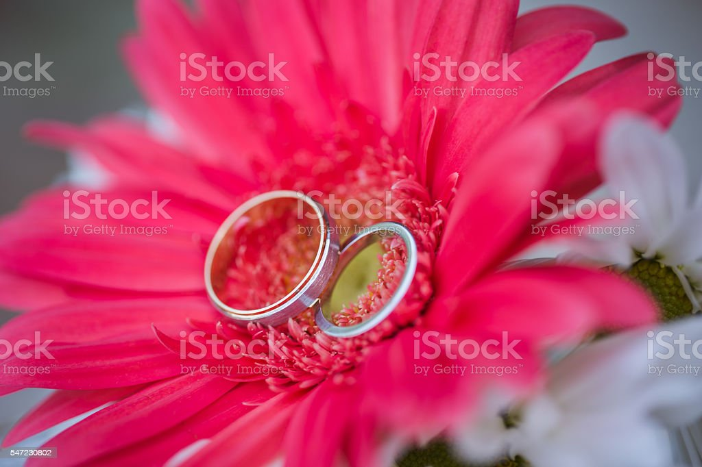 Wedding Rings On Red And White Flowers Stock Photo More Pictures