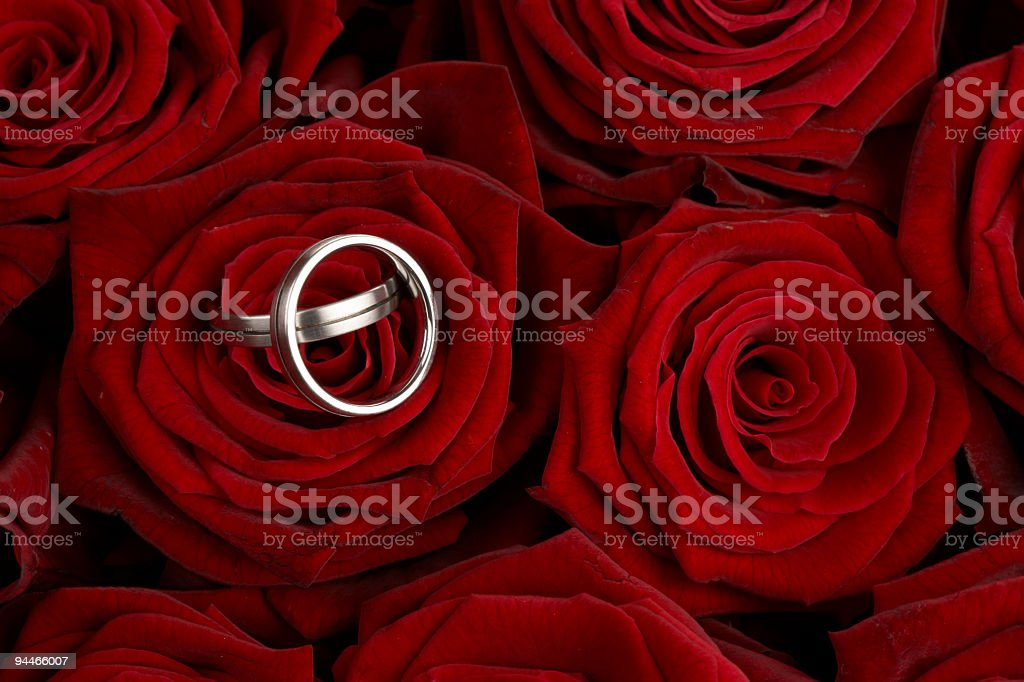 wedding rings on red roses royalty-free stock photo