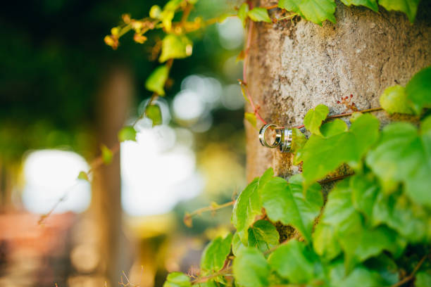 Wedding rings on the ivy stock photo