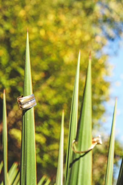 eheringe auf baum detail - eheringe öko stock-fotos und bilder