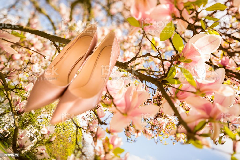 Wedding shoes hanging in a tree royalty-free stock photo