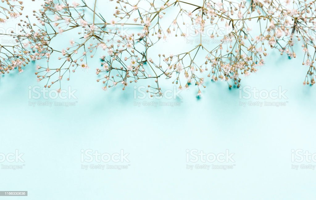 Wedding Summer Pastel Background Composition Of White Flowers On A Blue Background Stock Photo Download Image Now Istock