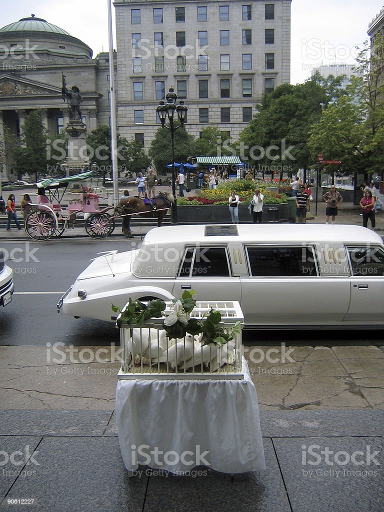 Wedding: white doves waiting to be released royalty-free stock photo
