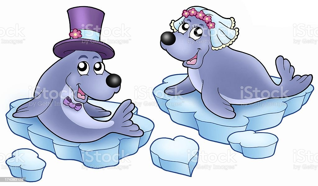 Wedding with cute seals stock photo