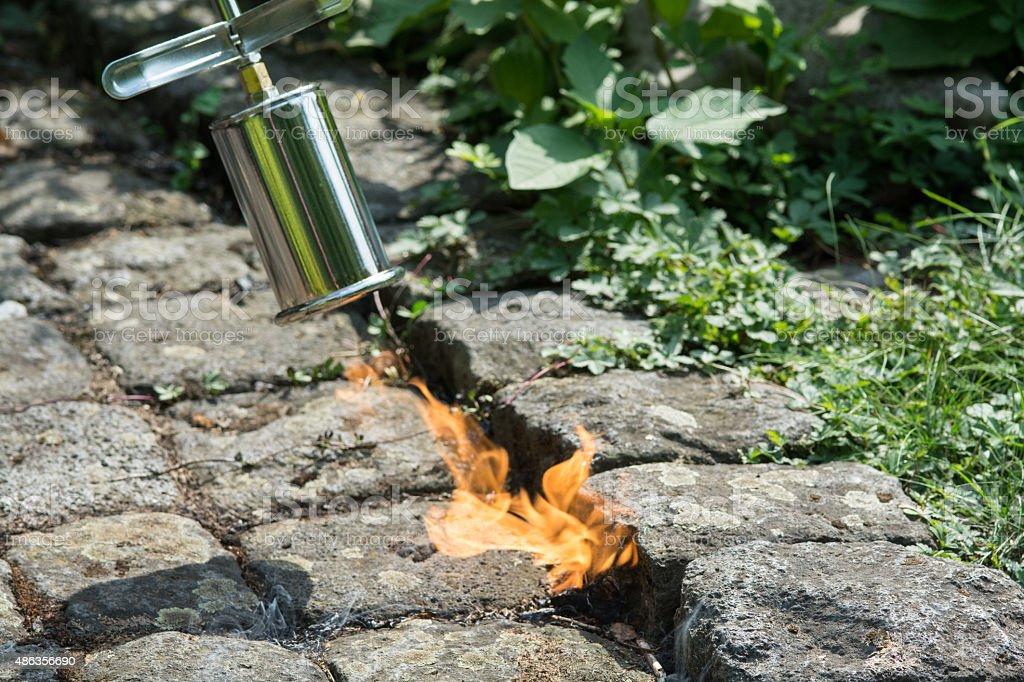 Erva daninha de controle de incêndio - foto de acervo