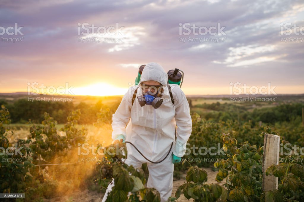 Weed control worker on field stock photo