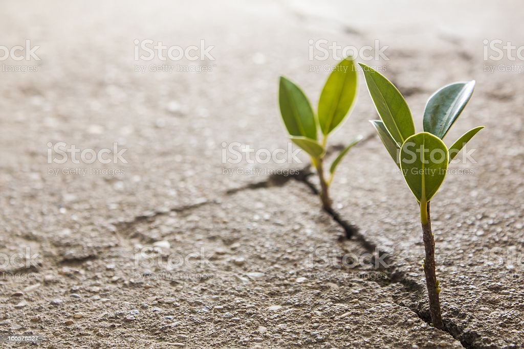 weed growing through crack in pavement royalty-free stock photo