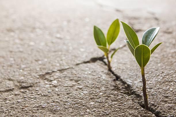 weed wachsenden durch Riss im Asphalt – Foto
