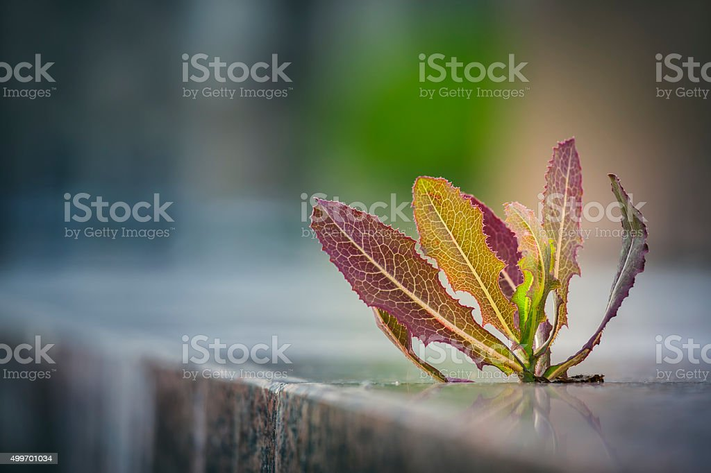 Weed growing through pavement stock photo