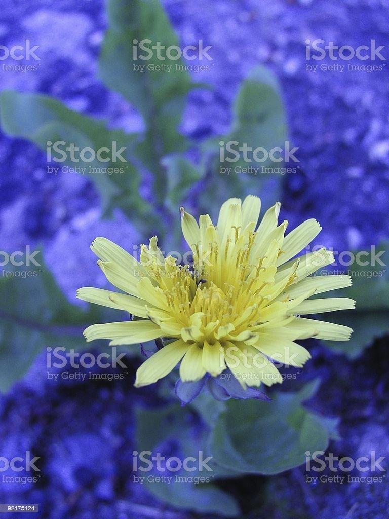 Weed im Blue (Abbildung Lizenzfreies stock-foto
