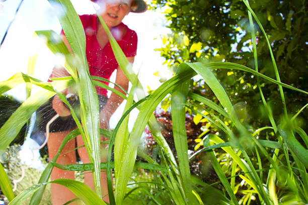 Weed Killer Green weeds being doused in weed killer by a mature woman gardener herbicide stock pictures, royalty-free photos & images