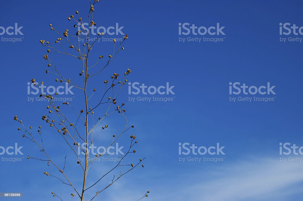 Weed over deep blue sky royalty-free stock photo