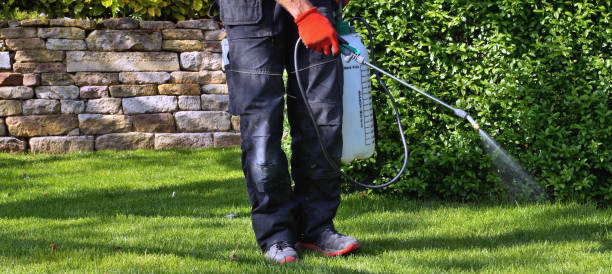 weedicide spray on the weeds in the garden. spraying pesticide with portable sprayer to eradicate garden weeds in the lawn. Pesticide use is hazardous to health. stock photo