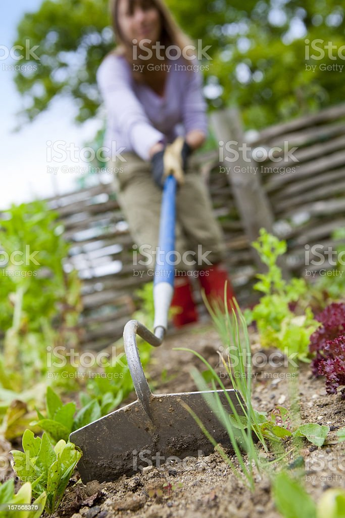 Weeding The Vegetable Garden stock photo