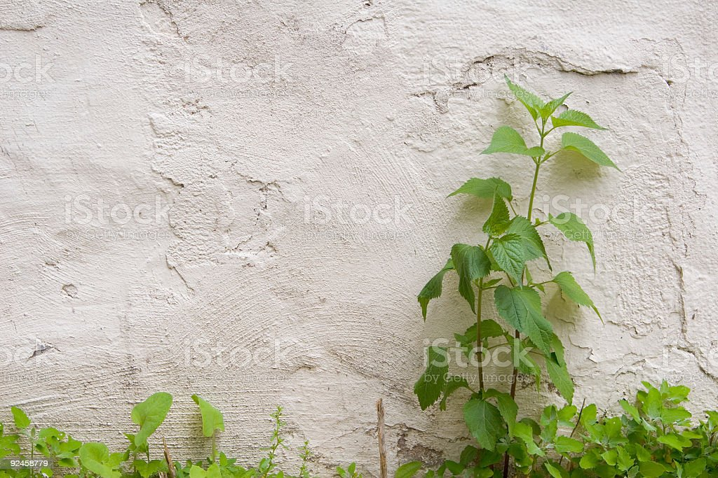 Weeds against a wall royalty-free stock photo