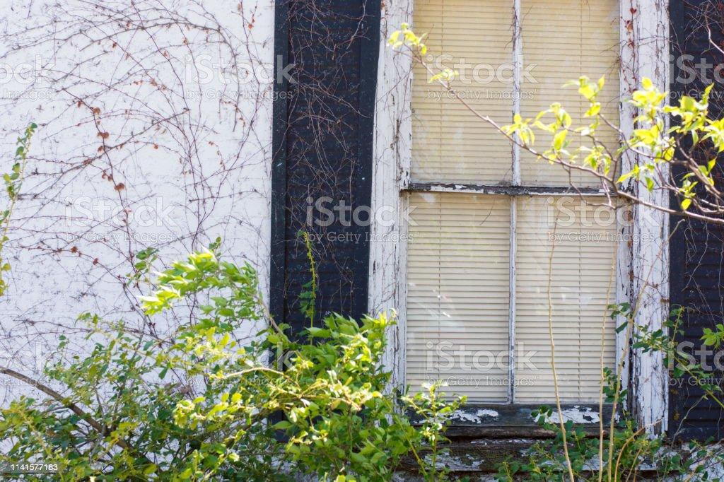 Weeds and windows stock photo