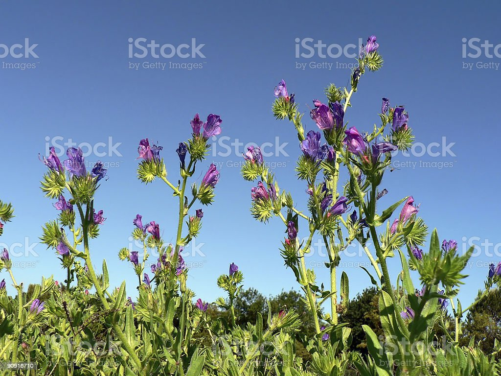 Weeds in Grass stock photo